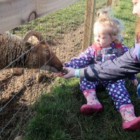 (AD) Our day out at Cotswold Farm Park