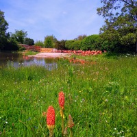 (AD) Wetland Heroes: Our day out at WWT Slimbridge